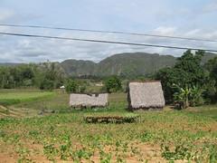 2013-01-cuba-309-vinales-tobacco plantage