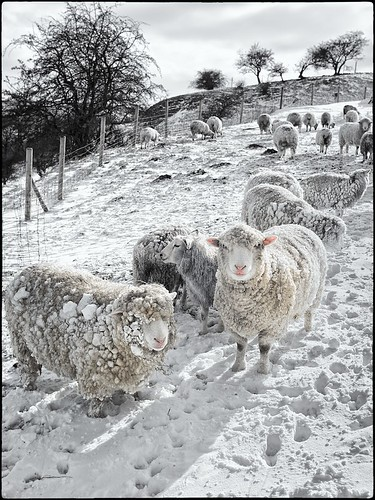 The benefits of a good Woolly Jumper by geospace