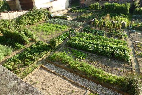 Brilliant vegetable garden