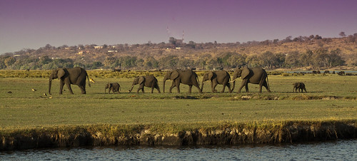 africa travel family elephant mammal safari botswana elephantfamily chobenationalpark