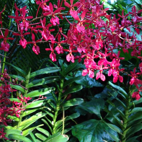 Singapore Orchid Garden 7
