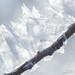 hoar-frost-detail-4