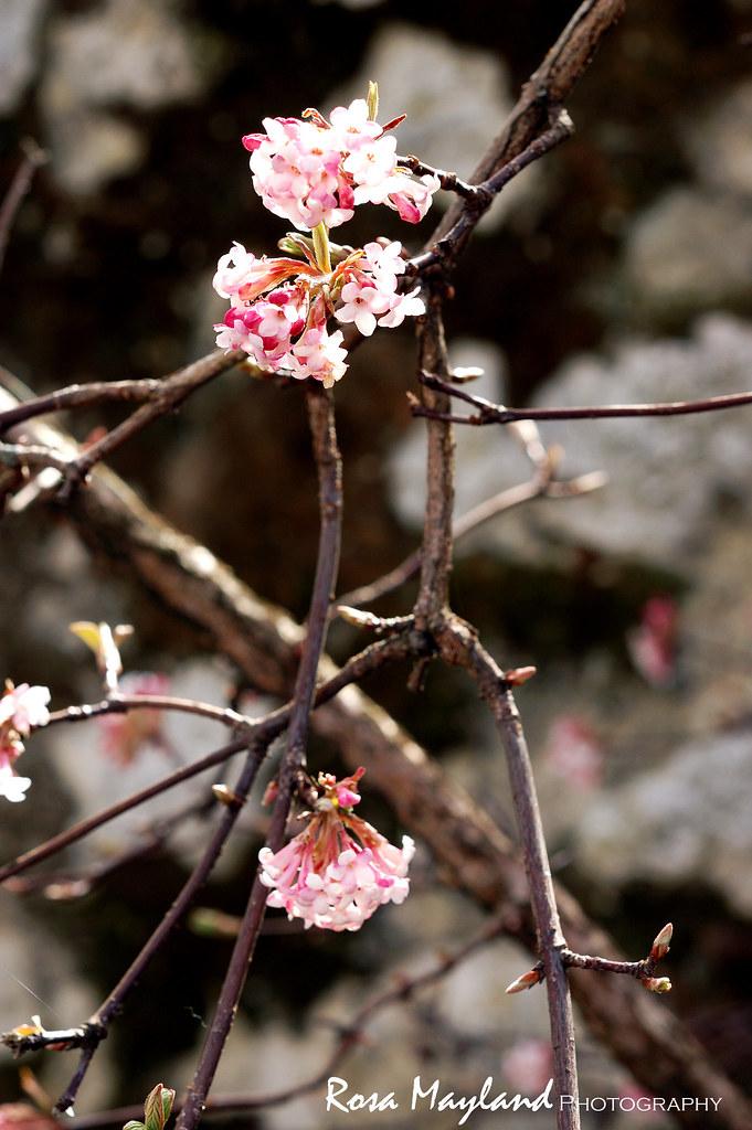 Spring Easter 1 2 bis