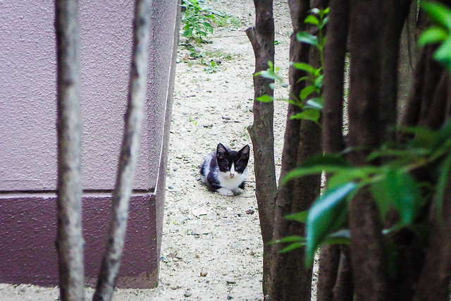 Today's Cat@2016-07-21