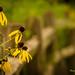 yellow sensation by skeem125