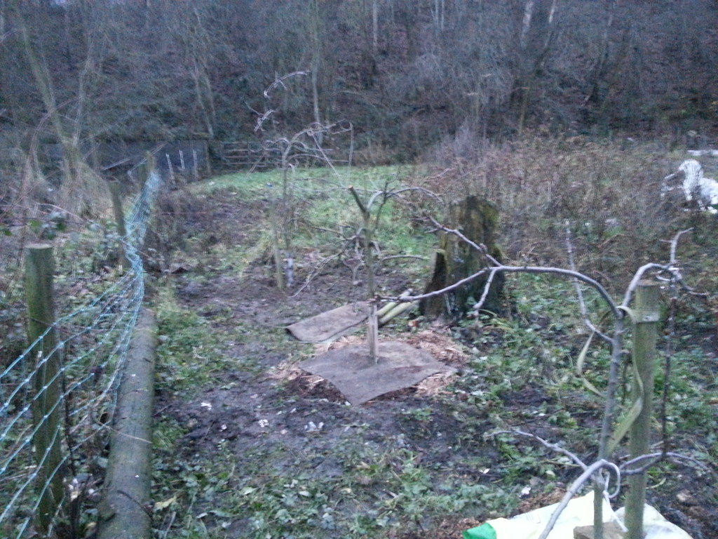 New Allotment