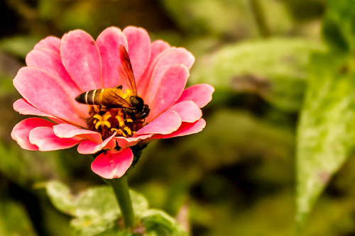Honey Bee & Flower