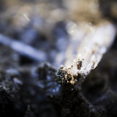 The Tip of the Ice Needle, Ice Fungi, Narashino