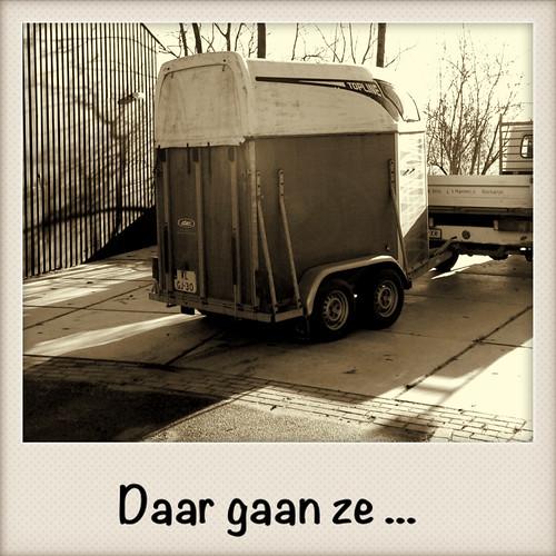 2013-01-11 kalveren naar Rockanje by edufloortje