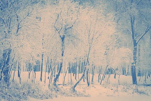 trees winter snow canon romania canonef70200mmf28lusm mogosoaia muntenia canoneos50d canon50d ilfov