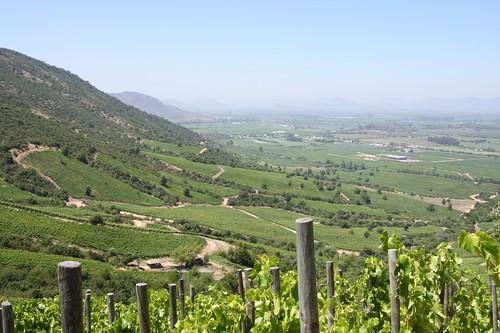 Colchagua valley