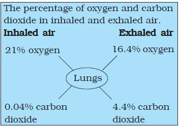 NCERT Class VII Science Chapter 10 Respiration in Organisms