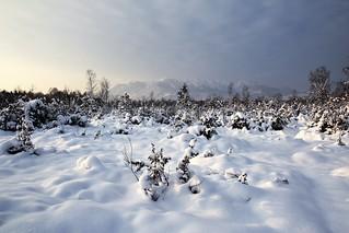 Endlich wieder Schnee