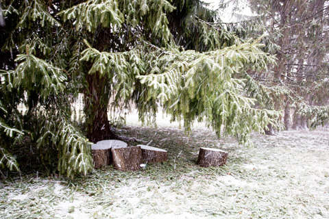 wintery1-0113