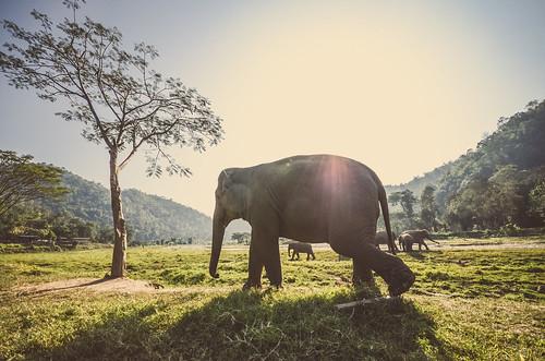 [フリー画像素材] 動物 (哺乳類), 象・ゾウ ID:201302021000