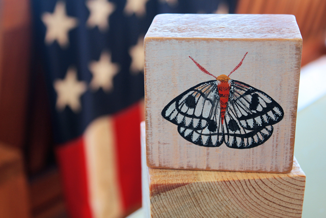 Moth on scrap wood