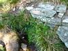 Bergeries de Luviu : la fontaine de Paliaceta