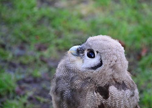 Owl 3 by birbee
