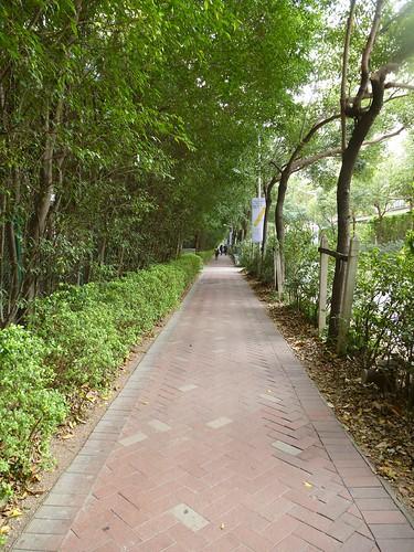 Shenzhen13-Oct (17)