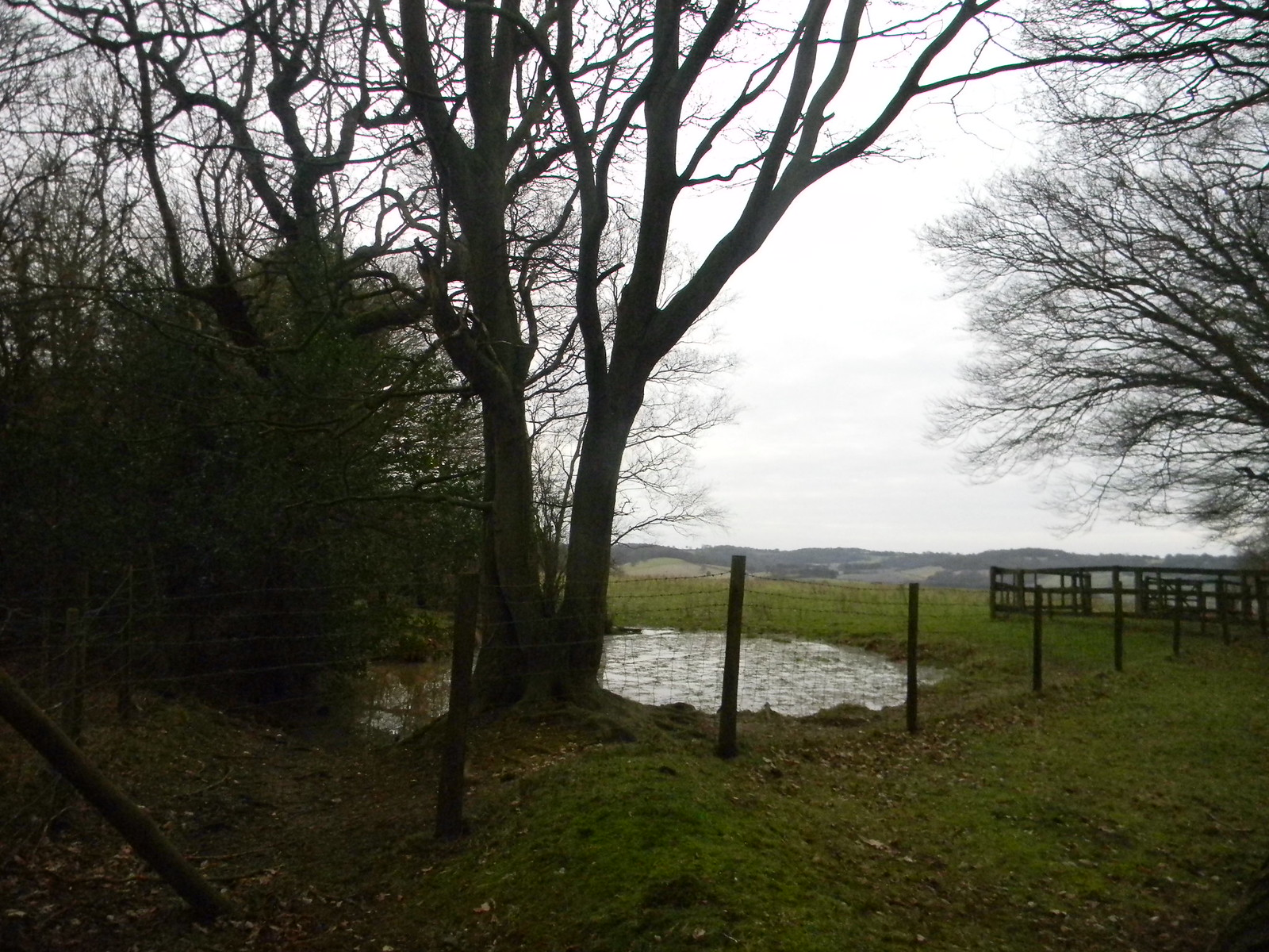 Pond and fence Chilham Circular