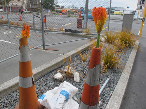 Road cones on Cashel Street