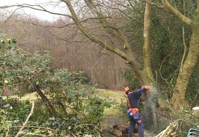 DSC_5722 tree felling