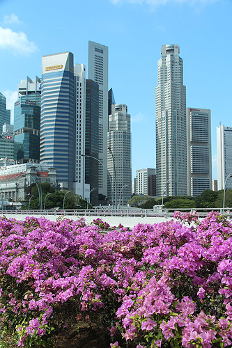 flowers and buildings