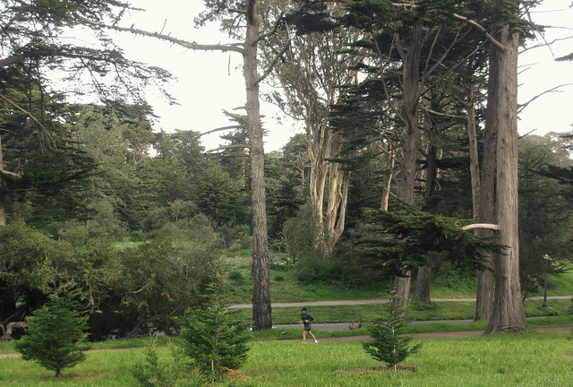 runner in Golden Gate Park, San Francisco (2013)