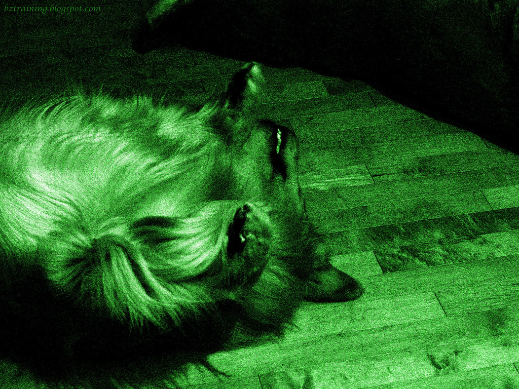 Night Vision Bitey-Face