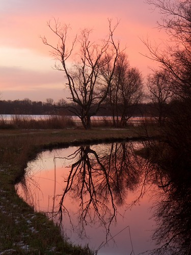 trees reflection netherlands forest sunrise canal nederland february amsterdamsebos noordholland 2013 canonpowershots90