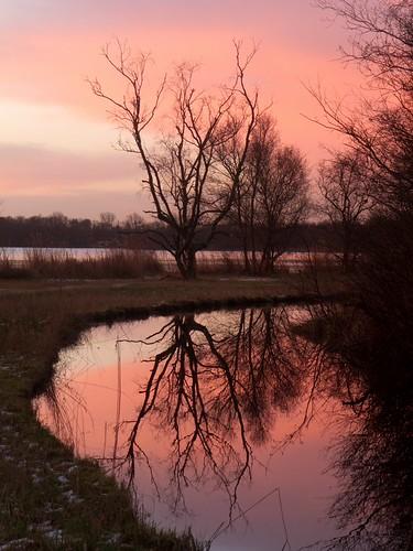 trees reflection netherlands forest sunrise canal nederland february amsterdamsebos noordholland 2013 canonpowershots90