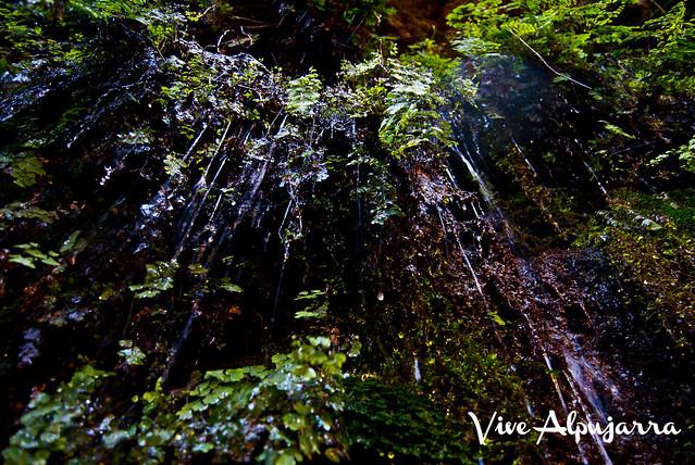 Detalle de Fuente Agria. Vive Alpujarra