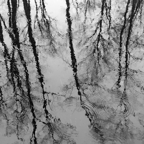 Reflection and snowfall ripples