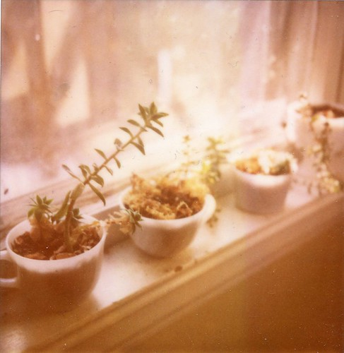 windowsill succulents