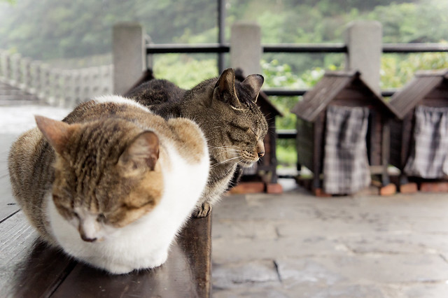 Snoozing cats, background cat houses
