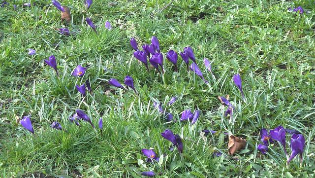 spring at standard 36