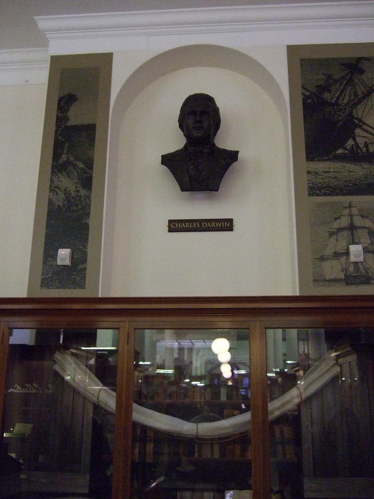 Darwin bust in loco