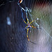 Catchy spider by Karla Magueta