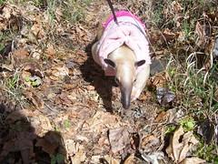 Pua spring walk