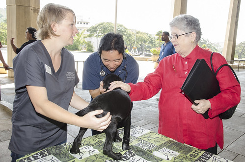 <p>President M.R.C. Greenwood at the display hosted by representatives of the Windward Community College veterinary technician program.</p>
