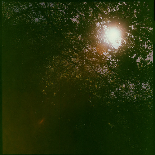 Sun Flare Trees