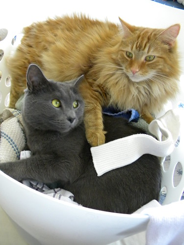 Laundry buddies