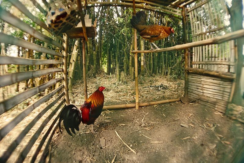 IMAGE: http://farm9.staticflickr.com/8090/8593630549_b8c34e5ae2_c.jpg