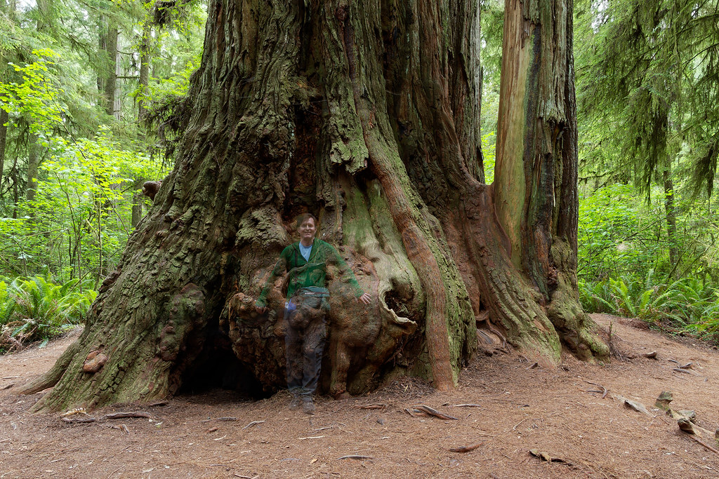 Rick Cameron appears to be fading in front of a large redwood tree