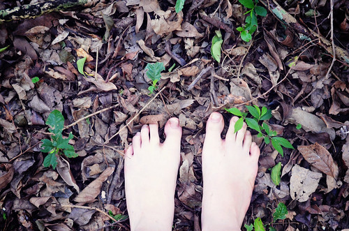 Leaves and feet