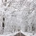Small photo of The road through Narnia...