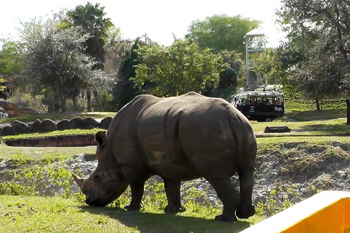 S1200017_White_Rhinoceros