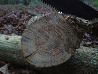 Fine Ash wood