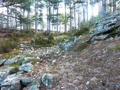 Boucle de la bergerie de Biancarellu :  arrivée vers le col par le sentier cairnée