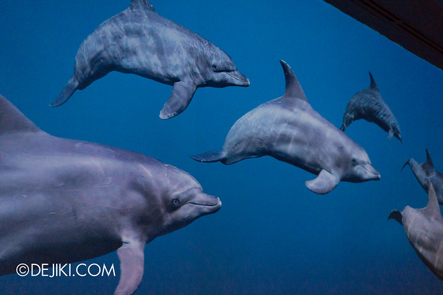 S.E.A. Aquarium - Dolphin wall